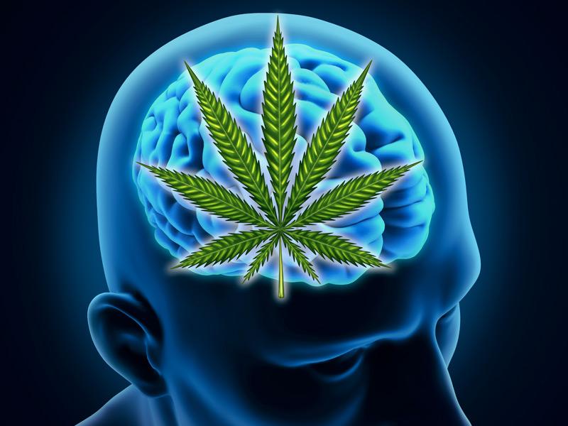 Nova geração de remédios à base de cannabis avança no mercado nacional