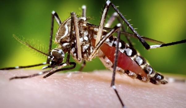 Chip usa material genético para detectar vírus da zika