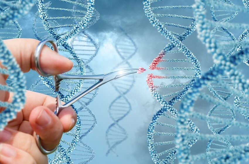 Doenças raras: Roche e Eretz.bio lançam desafio de startups