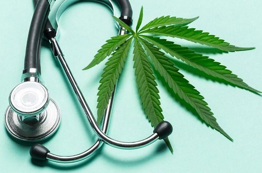 The Green Hub busca startups e projetos no setor de cannabis