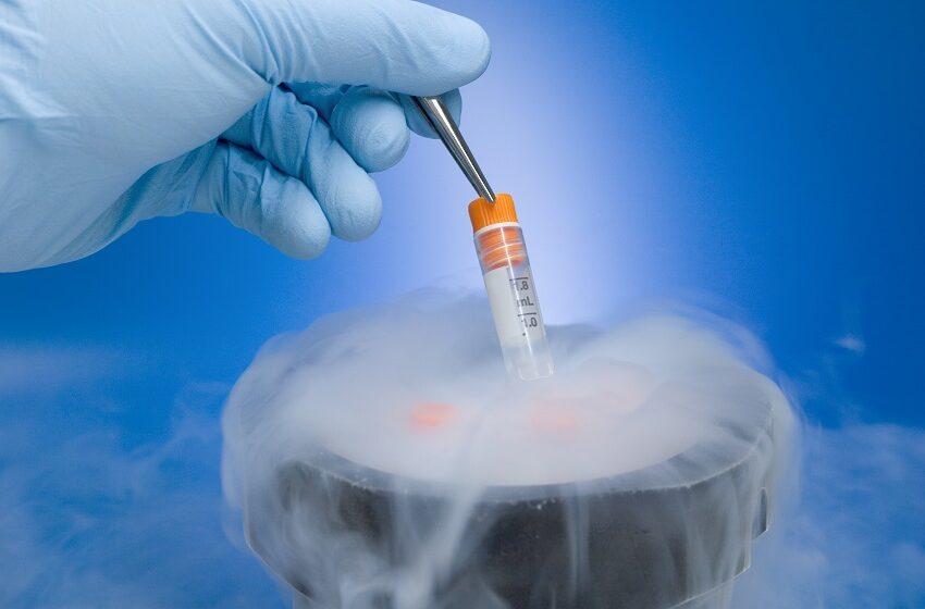 STJ: Congelamento de óvulos deve ser pago por plano até fim de quimioterapia