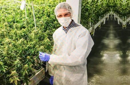 Publicação inédita aborda as perspectivas da Cannabis Medicinal no Brasil