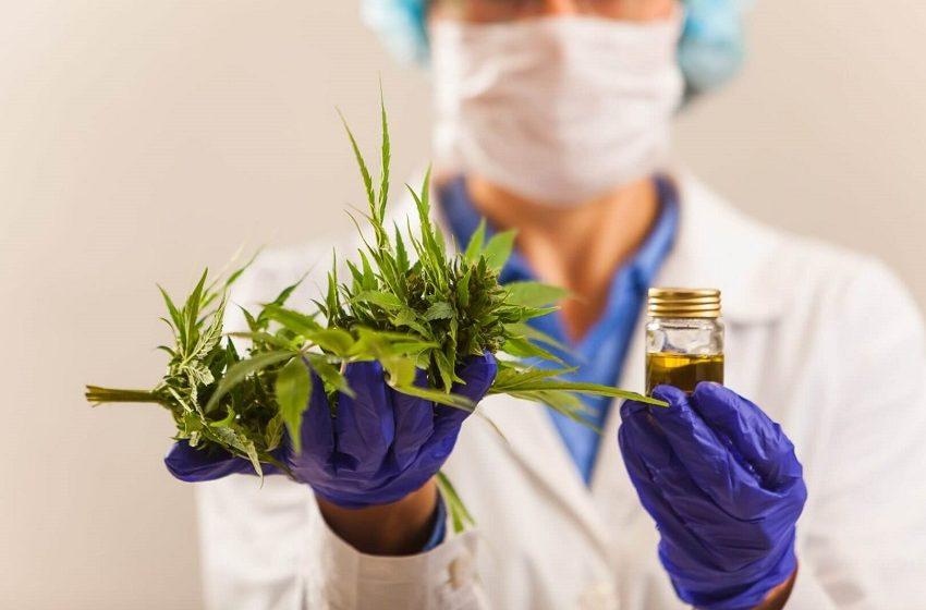 Webinar aborda Regulação e Evidências da Cannabis Medicinal