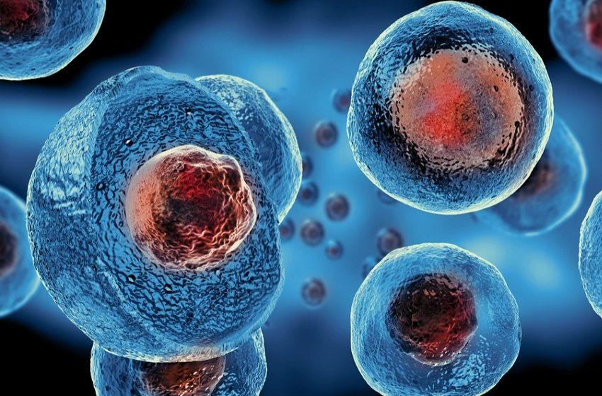Hospital IPO inaugura centro de pesquisa em células-tronco